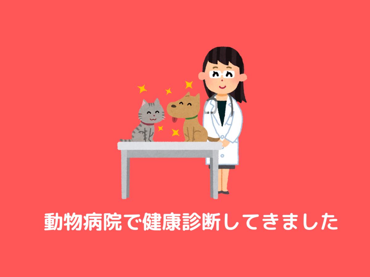 子猫を飼い始めるときは最初に動物病院で健康診断を受けておこう
