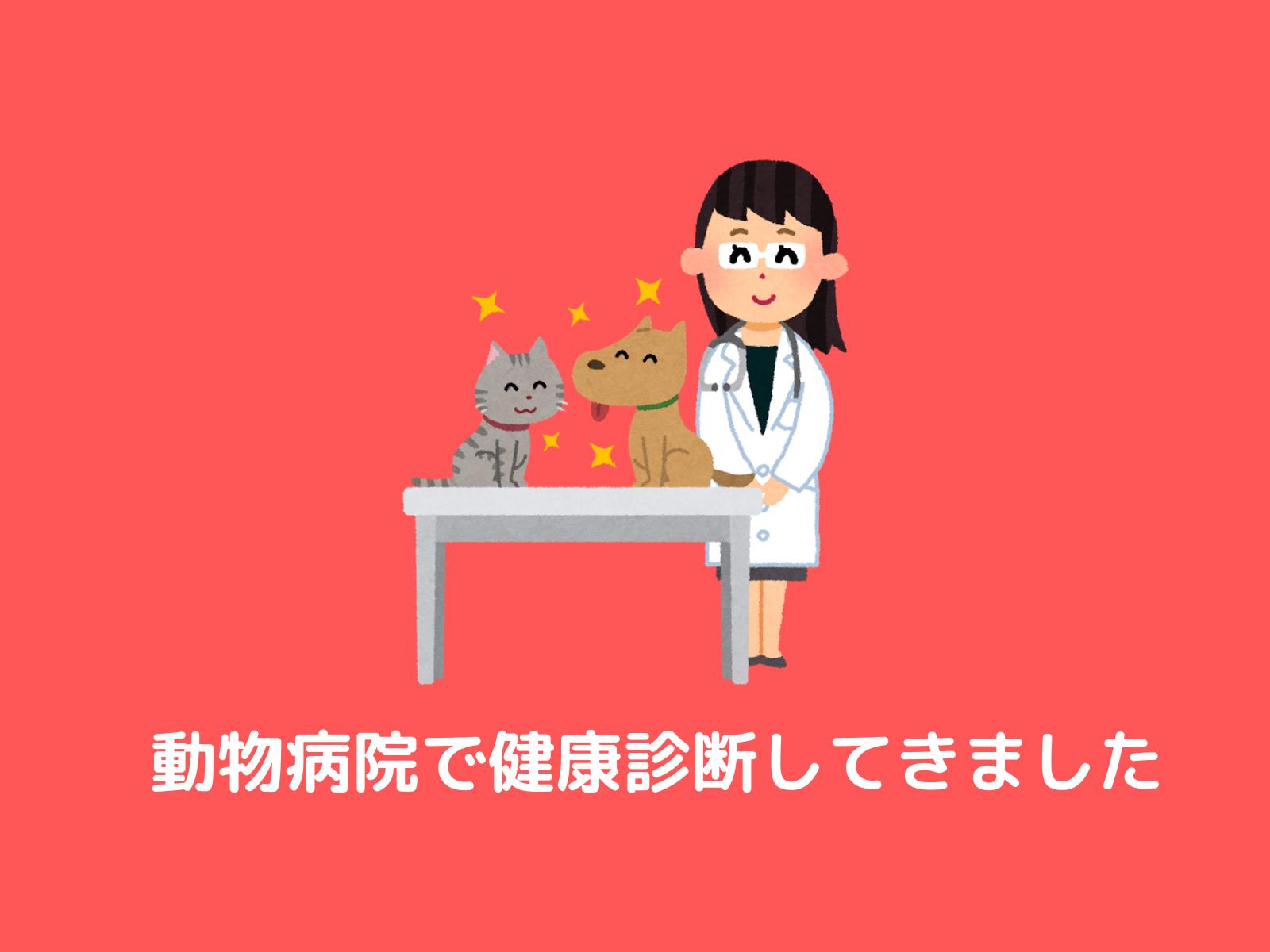 動物病院で健康診断してきました