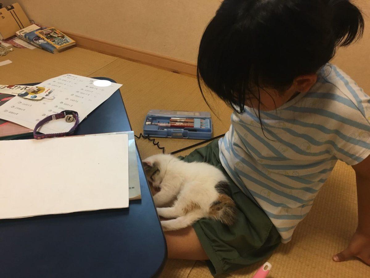 一緒に勉強してます