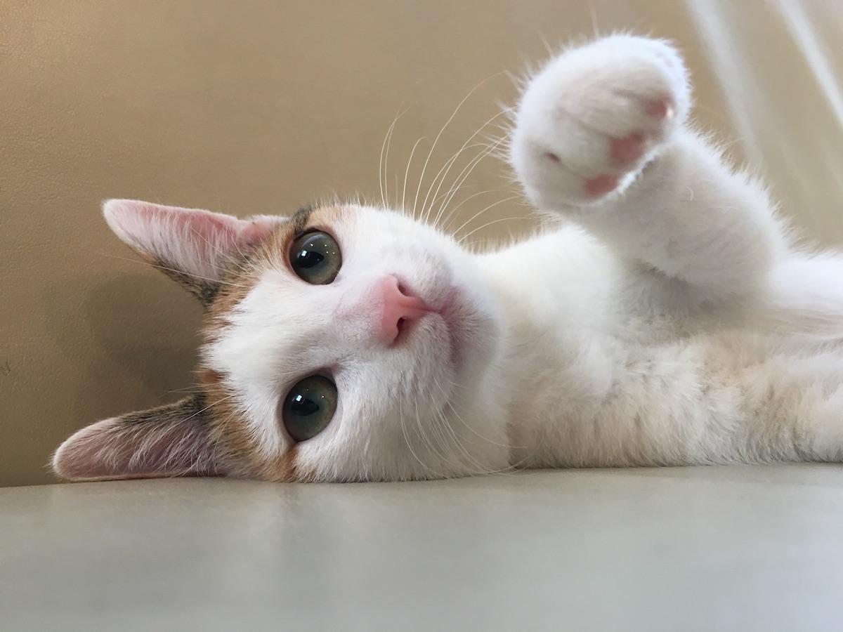 よろちゃんの猫パンチ!起こすと機嫌が悪いのね…。