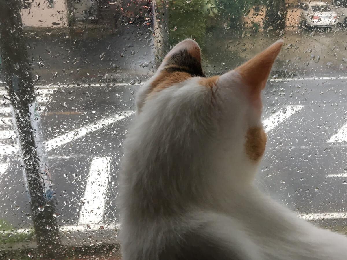 外を見つめるよろちゃん