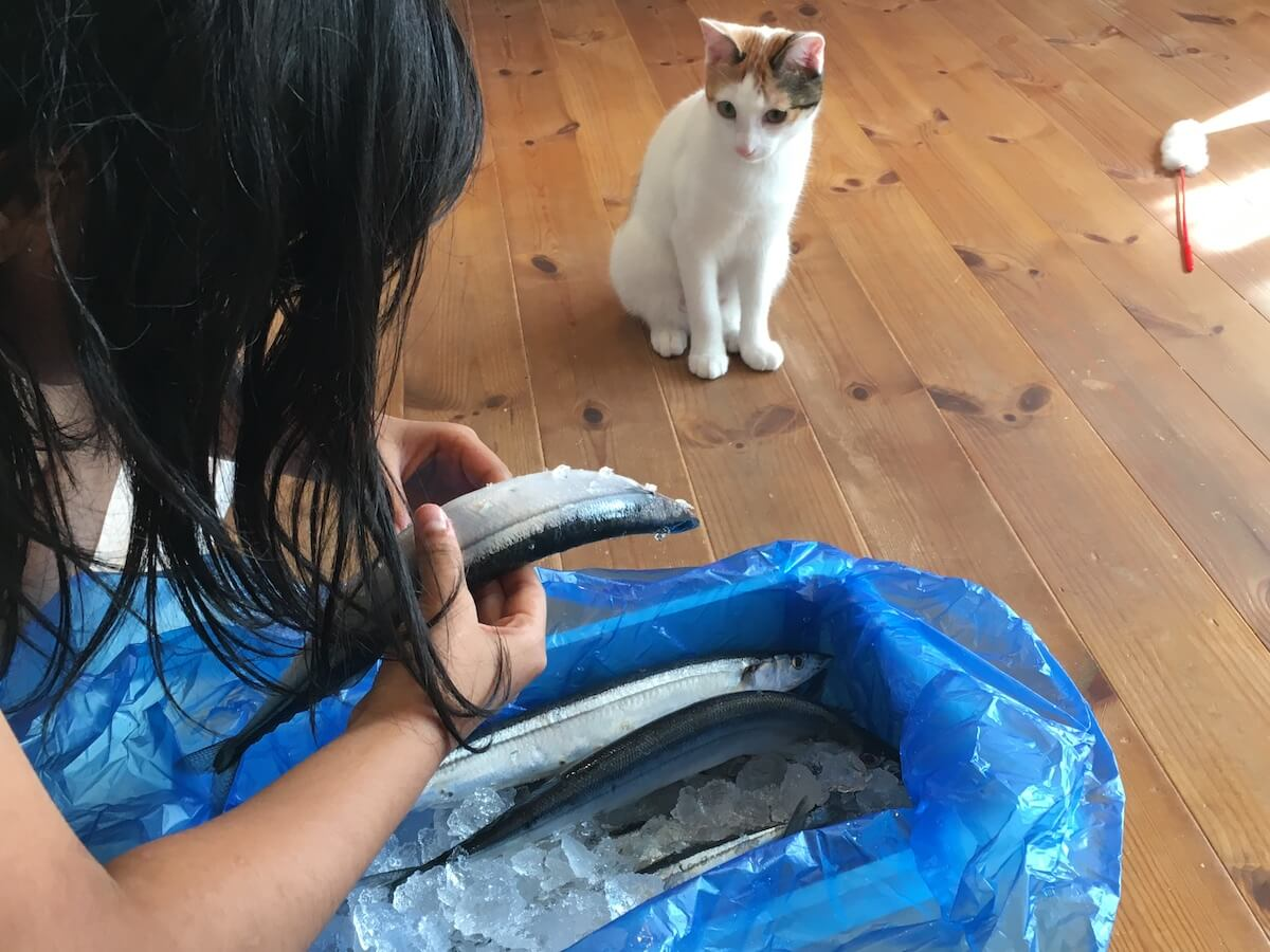 猫とサンマ