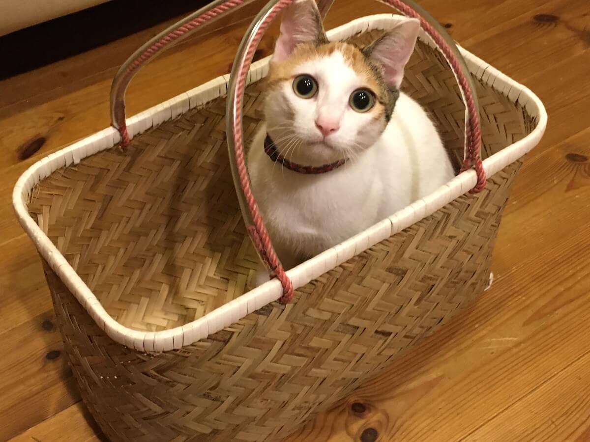 猫は狭いところがよく似合う