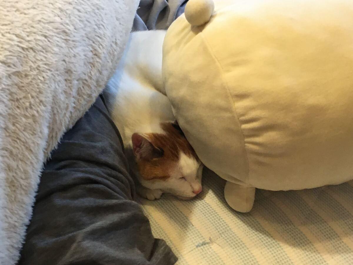 布団で寝るよろず