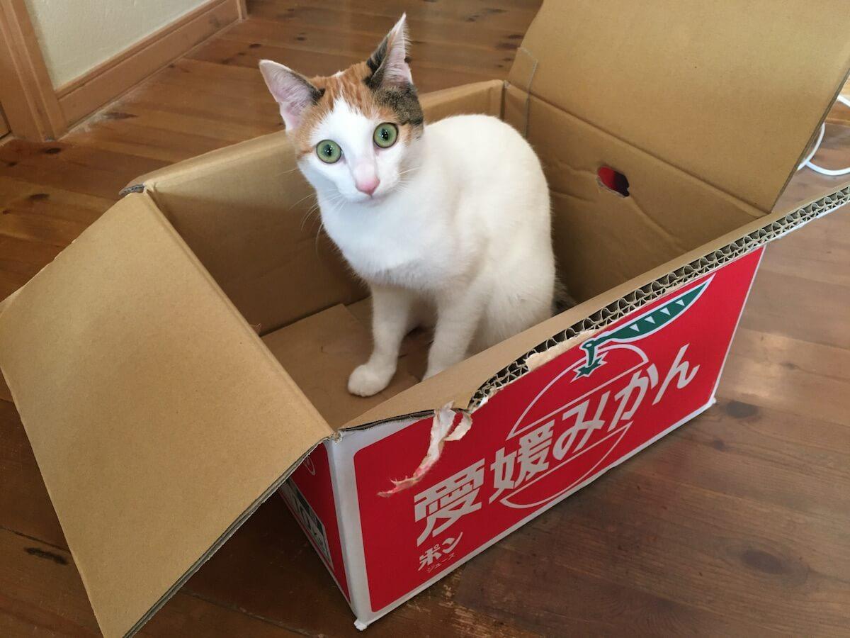 猫とみかん箱はよく似合う