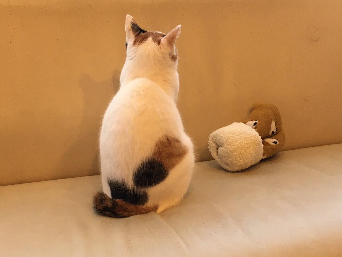 猫の後ろ姿はかわいい