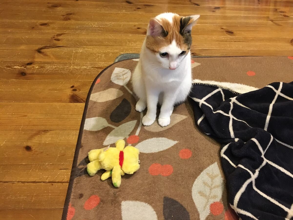 猫がおしりをくっつける仕草は何?