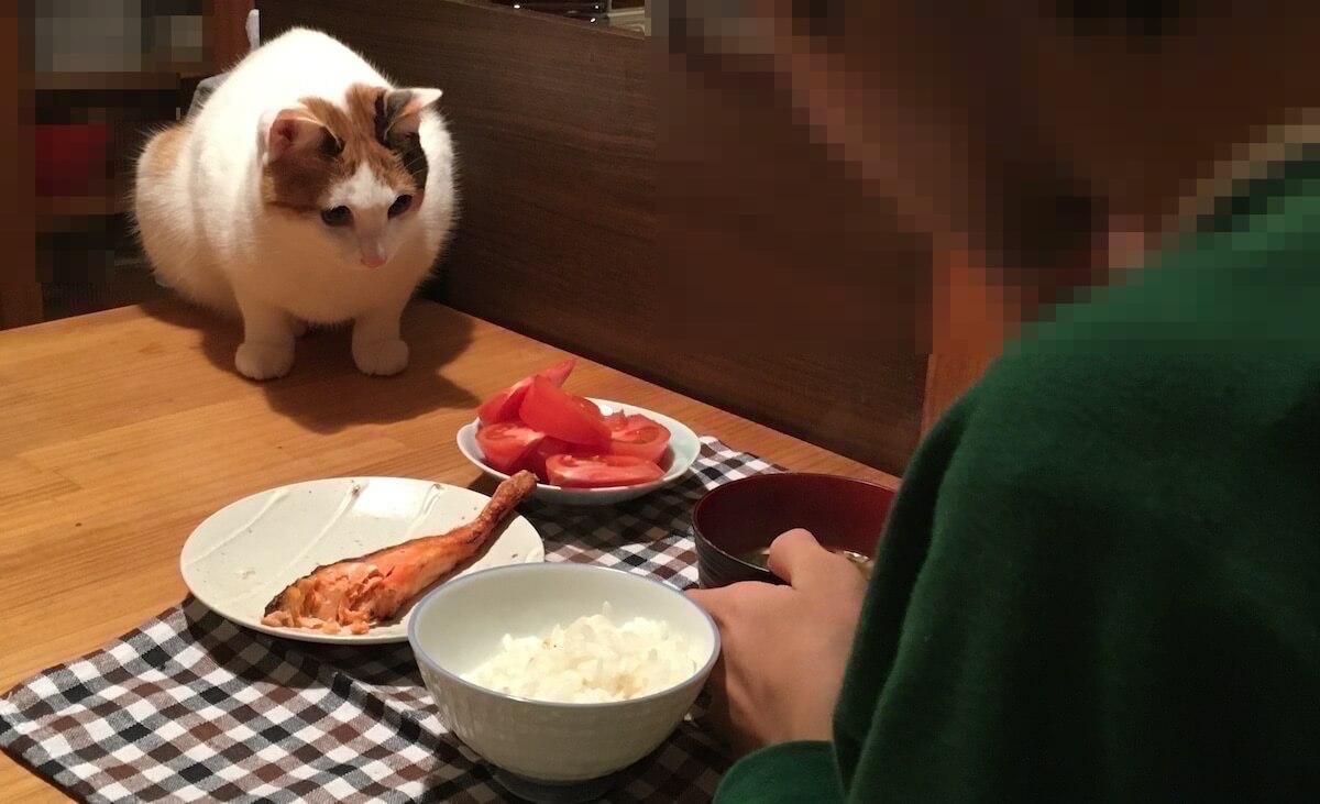 猫対長男。朝食をめぐる静かな戦い。