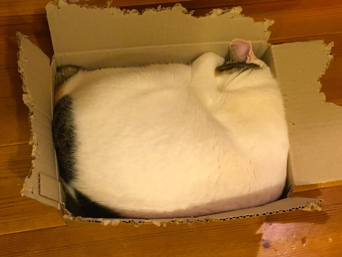 は、箱猫・・・!?