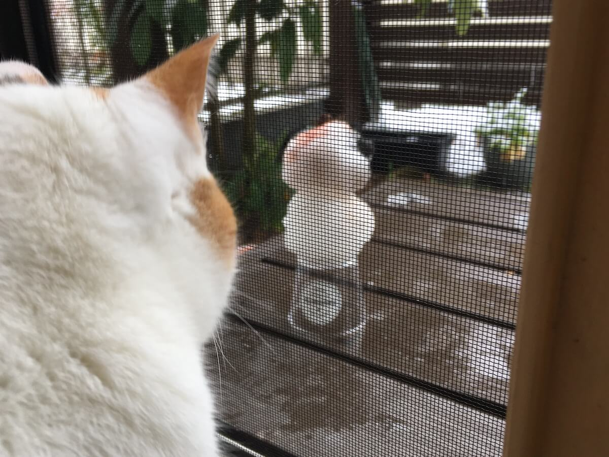 雪が降ったのでよろず雪だるまを作りました⛄