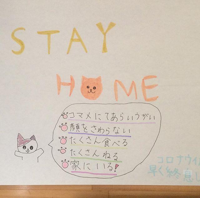 STAY HOME週間。人も猫もお家で過ごしましょう😊😺
