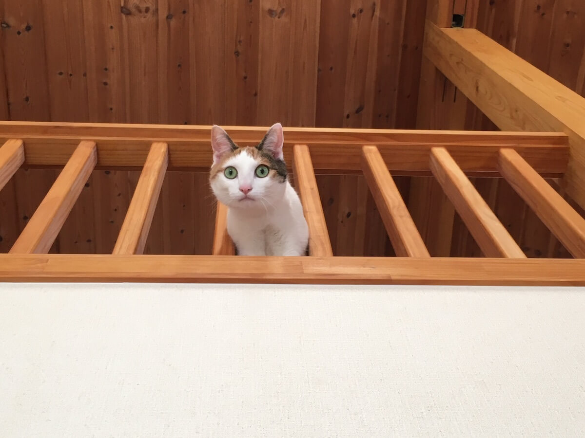 ロフトで遊ぶ猫