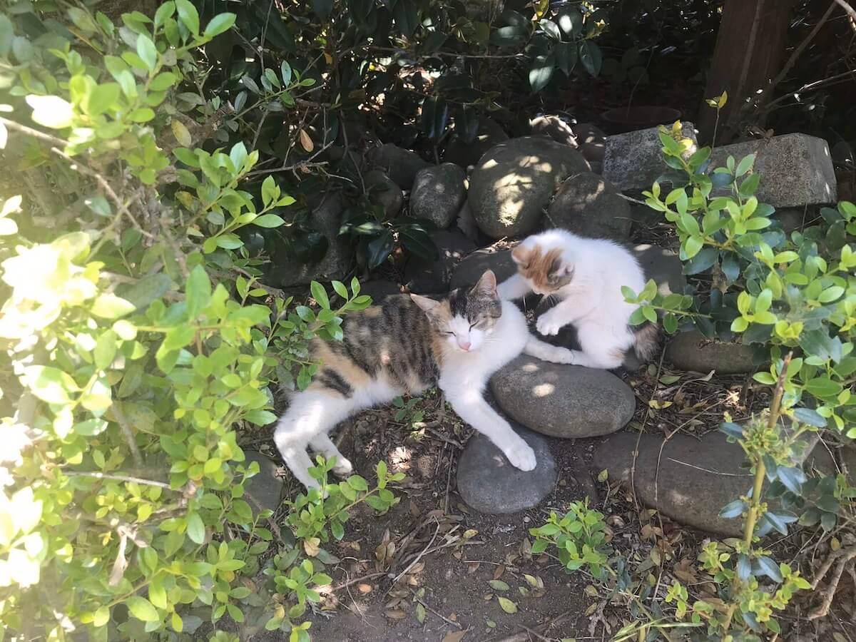 お母さんと一緒の子猫時代のよろちゃん
