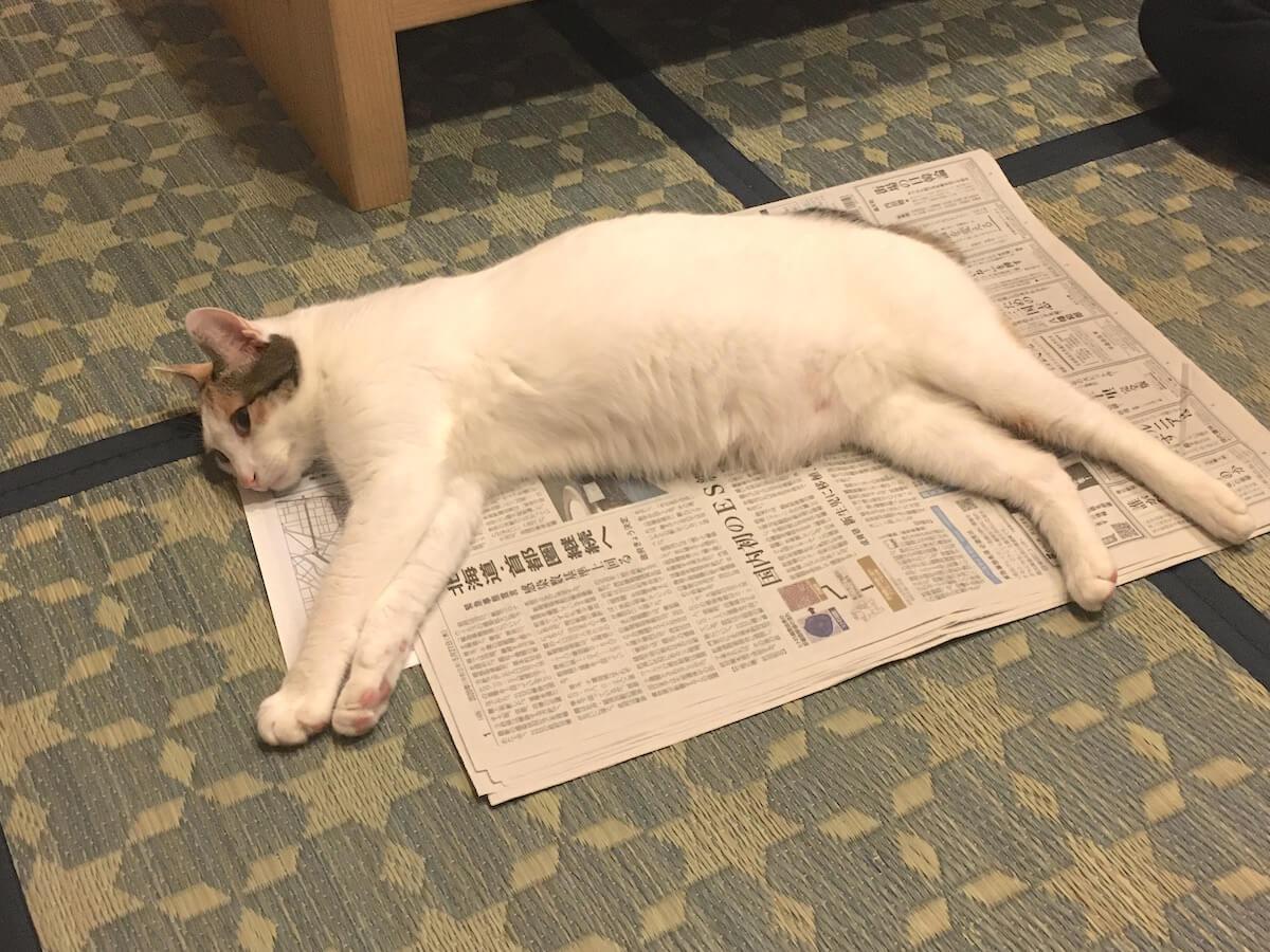新聞紙に寝転がる猫さん