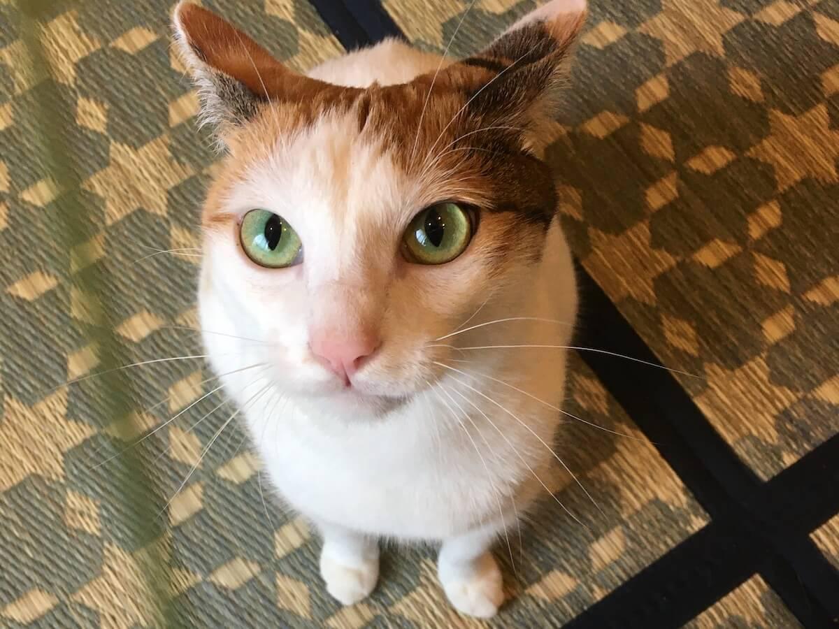 猫は本物のねこじゃらしが大好き!?