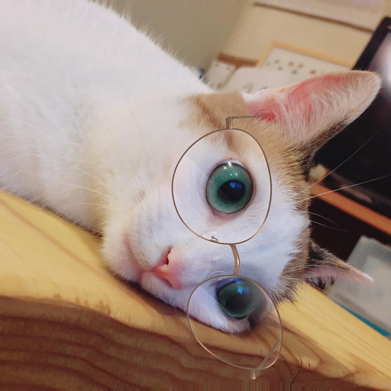 メガネ女子(猫)が誕生しました