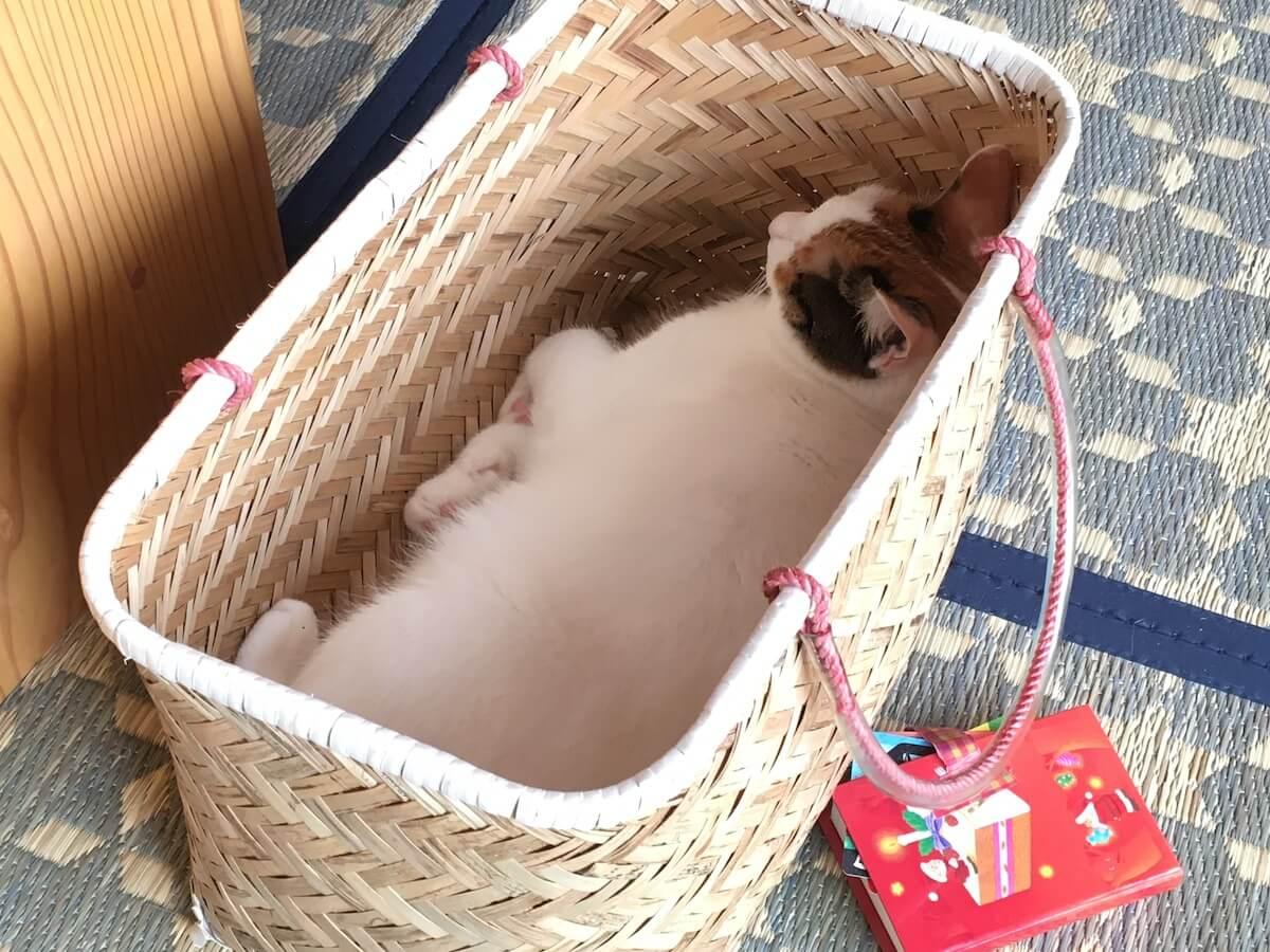 買い物かごの中で昼寝