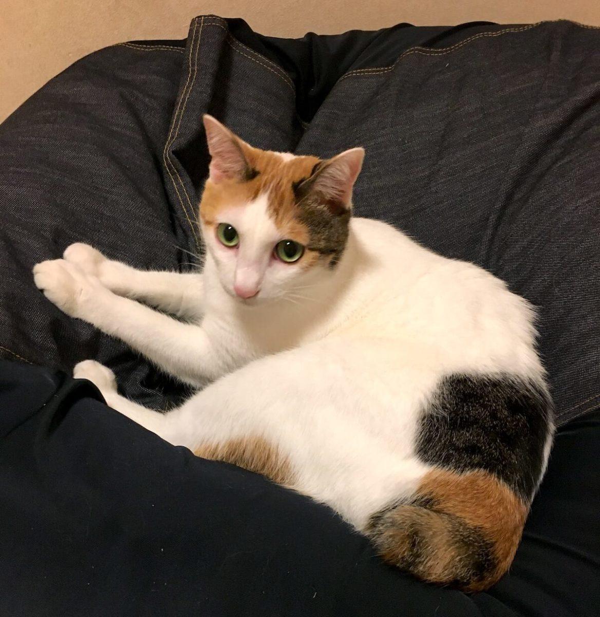 人をダメにするソファは果たして猫もダメにするのか?