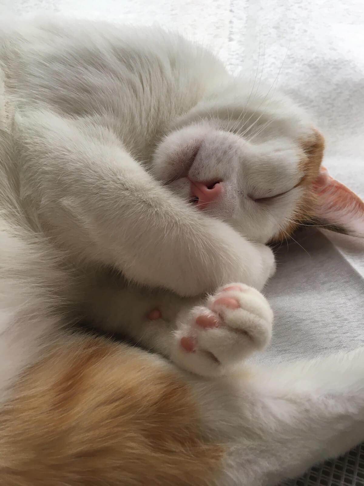 素晴らしき寝顔