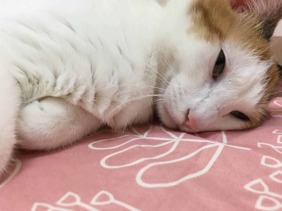 猫はモーツァルトの曲が好き!?
