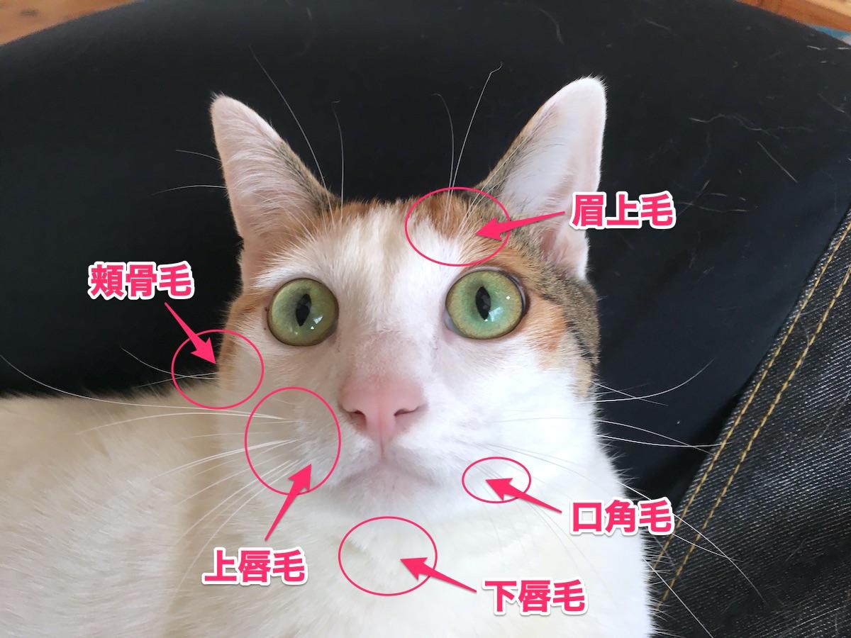 猫のヒゲの種類