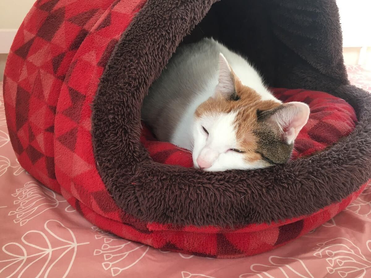「ベッドの上のベッド」で昼寝するよろずさん